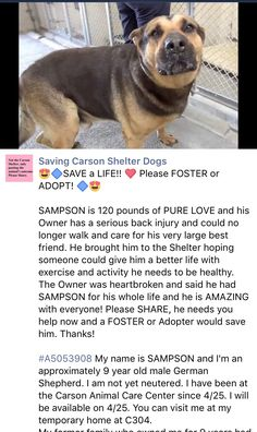 4/26/17 PLEASE SHARE TO SAVE SAMPSON❤️ READ HIS HEARTBREAKING STORY PLEASE! /ij