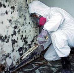 Mold Mitigation
