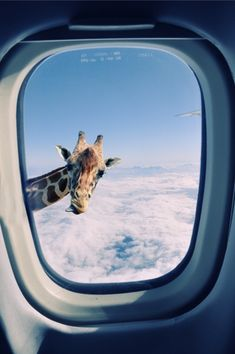 "Giraffe outside airplane window: ""During the flight over zoo"" collage by 2jun on Flickr"