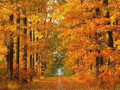 おはようございます。 今朝の一曲はまた秋の定番「枯葉」、トゥーツ・シールマンスとケニー・ワーナー、哀愁のある音色のハーモニカに、リリカルなピアノのデュオです。 鮮やかな紅葉の映像が美しく、旅行に行きたくなりますね。そういえば、11月の三連休に家族で旅行に行く予定を考えたのですが、金沢方面がめちゃ混みで断念。行き先を変えようと思っていたら、急に忙しくなってしまい、計画が進んでいないのはちょっと慌てないといけない事態かも(^_^;;