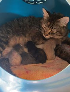 Peter Chan, Foster Cat, Little Kittens, Just Giving, The Fosters, Birth, Cats, Videos, Fun