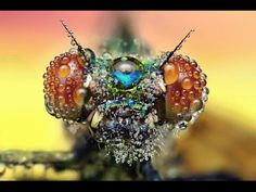 Amazing Macro Photographs of Insects Covered in Dew - The natural world continues to amaze us! Fotografia Macro, Beautiful Bugs, Amazing Nature, Beautiful Life, Beautiful Images, Beautiful Things, Insect Photography, Art Photography, Amazing Photography