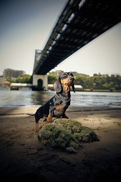 serena photograpy dogs | color pictures: afafaf color pictures: 525252 color pictures: cbcbcb ...