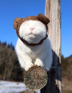 しろいぬぼうし   のせ猫オフィシャルブログ Powered by Ameba