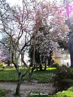 Inicio da Primavera em Aveiro - Portugal