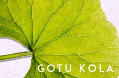 Gout kola for memory concentration anti aging Meet the buzzy plant that calms the mind—and naturally boosts collagen production