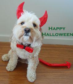 #smpwhalloween Lil' Devil