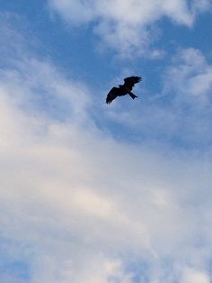 A hawk flying above my head while sitting on steps at Enoshima.
