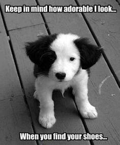 puppy border collie meme .. Enjoy this border collie humor. #bordercollie #putting_the_O_in_JAMSO
