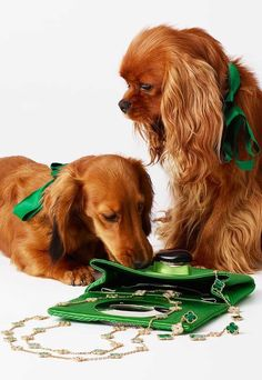 Calendar Girls, New Theme, Town And Country, Cavalier King Charles, 2 In, Redheads, Dog Cat, Cats, Green