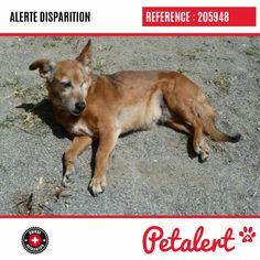 Cette Alerte (205948) est désormais close : elle n'est donc plus visible sur la plate-forme Petalert Suisse. Nous avons perdu espoir Merci pour votre aide. Visible, Aide, Dogs, Switzerland, Shape, Dog, Animaux, Pet Dogs, Doggies