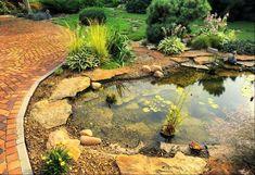 jardins aquatiques bassin pierre idée plantes déco