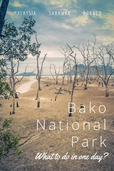 Discover Bako National Park on Sarawak, Borneo in Malaysia. Considering the short distance from Kuching, Bako National Park is ideal for a one or two-day travel trip! Read our travel tips to make the most of it ♡