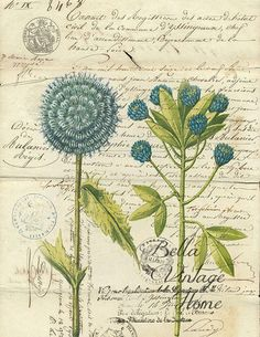 Botanical Print Blue Flower – www.BELLAVINTAGEHOME