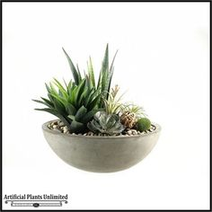 Mixed Succulents, Aloe and Agave in Concrete Boat Planter, 16 in.