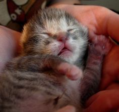 It's Impossible To View These 25 Seriously Cute Pictures Of Kittens Without Smiling