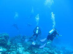 Cozumel é um dos melhores lugares do mundo para mergulhar. Nós experimentamos Mergulhar em Cozumel em dois locais nos recifes de coral que circundam a ilha.