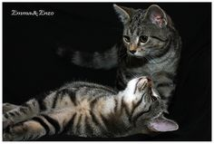 Kitties by Frank Will, via Flickr