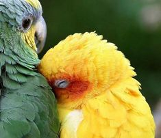 Aww, you are making me blush!!
