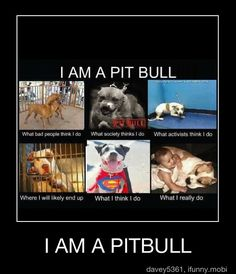 for pitbulls-its not in their genes, its all about their environment that can either turn them bad or good. I love my pitbull :) I Love Dogs, Puppy Love, Cute Dogs, Animals And Pets, Funny Animals, Cute Animals, Beautiful Creatures, Pitbulls, She Wolf