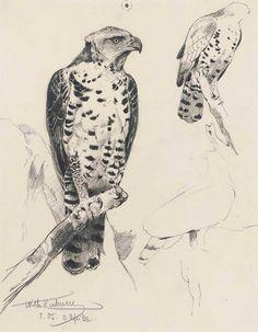 Gurney Journey pencil draft/study by Wilhelm Kuhnert (1865-1926)