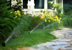 SISTEME DE IRIGATII Pop Up, Lawn, Plant, Popup