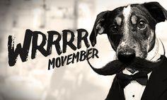 Wrrr, je tu další Movember! #movember #jackrussel #classic