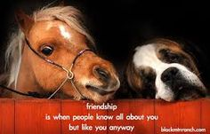 Image result for funny horse and dog quotes