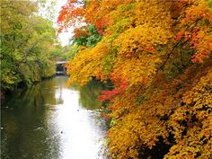 The Red Cedar River Runs Through Michigan State University http://photo.accuweather.com/photogallery/2009/10/500/139c05fce.jpg