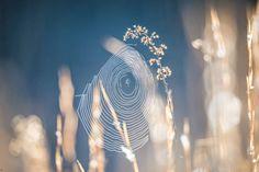 morning sun illuminating spider web oon a lawn