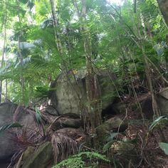 Exploring the jungle #paradise #jungle #florest #honeymoon #luademel #nofilterneeded #nofilter #nature #travelphoto #travel #seychelles #seychellesisland #constancehotels #constanceephelia #resort