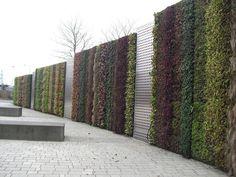 Fancy - Planted Gabion Wall