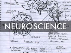 """Learn about """"Neuroscience"""" in this Haiku Deck by Jayme Linton."""