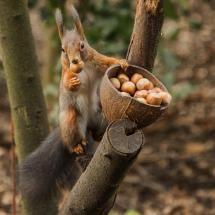nuty squirrel by annie 1931-pixdaus