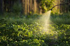 Zbavte sa vošiek bez chémie | Záhrada.sk Gardening, Magazine, Ideas, Chemistry, Lawn And Garden, Magazines, Horticulture, Square Foot Gardening, Garden Care
