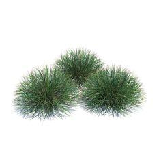https://img-new.cgtrader.com/items/37315/ornamental_festuca_grass_plant_3d_model_28c4e82d-b3a2-45e8-933f-b9bc0df47740.jpg