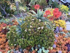 A lively variety of succulents are densely planted in the Peralta landscape, creating a colorful and resilient tapestry despite challenging drought conditions.  Photo: Mary Dodder McCorkle