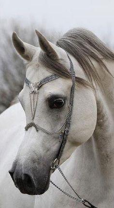 Beautiful horse and bridal