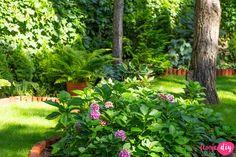 19 roślin, które będą rosły w zacienionych miejscach! - Twoje DIY Bonsai, Diy And Crafts, Pergola, Home And Garden, Grill, Plants, Gardening, Shadows, Lawn And Garden