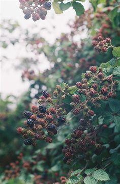 wild berry picking