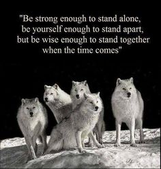 Discover and share She Wolf Quotes. Explore our collection of motivational and famous quotes by authors you know and love. Great Quotes, Quotes To Live By, Life Quotes, Inspirational Quotes, Daily Quotes, Wisdom Quotes, Success Quotes, Spirit Quotes, Quotes Quotes