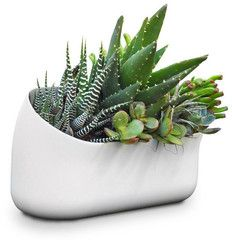 this is only one of the many pieces you can use to build your own modular indoor wall planter!