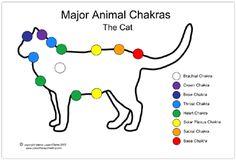 Como equilibrar las energías de tu mascota, Reiki para mascotas, chakras para animales