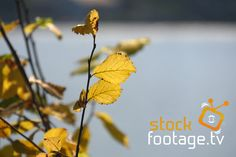 Hello #beautiful #autumn with #great #colours Watch our #stockfootagetv #videoclips in #hd or #4k @ http://www.stock-footage.tv #coloursofautumn #fall #videoproduction #stockfootage #stock #videoediting #filming #filmmaking #cinematography #videography #video #travel #naturelovers #leaves #camera #filmcamera #picture #like