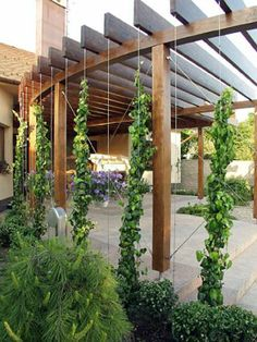 Slowakei Pergola – cables play a double role as bracing along with planting structure.