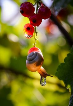 Snail by Vyacheslav Mishchenko - Вячеслав Мищенко✖️ SNAILS More Pins Like This At #FOSTERGINGER @ Pinterest