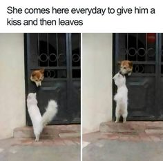 Animals Are The Source Of The Cutest Memes