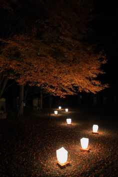 Japanese Garden lights