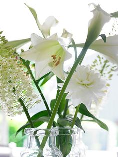 Buy Easter lily bulbs Lilium longiflorum 'White Heaven (PBR)': Delivery by Crocus.co.uk