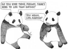 This is me in a nutshell....it tops it off that it's a panda. Xiong mao!!!